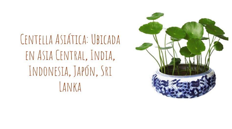Centella asiática